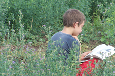 Photo of Joshua studying in field of Lucerne