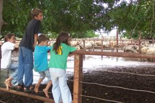 Kids go with their Dad to a muddy cattle yards